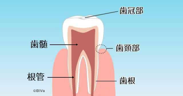 歯茎下がり「論より証拠」